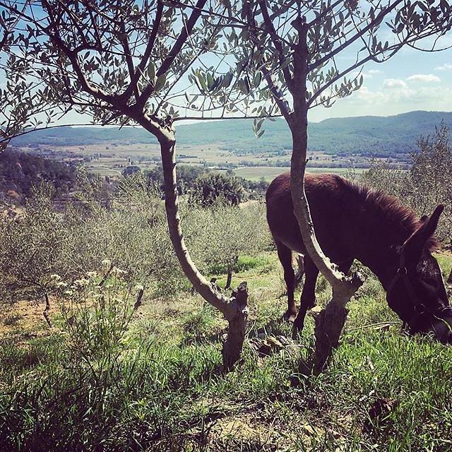 #donkey #hike / #walk / #eat above #montfortsurargens @maisonlambot