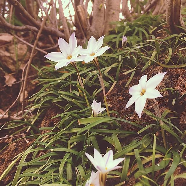 #pretty #spring #flowers #provence