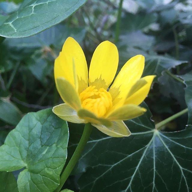 #prettyflowers @maisonlambot
