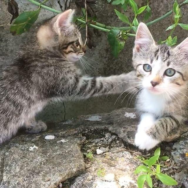 #kittens #kittensofinstagram #kittensforsale #tabbykitten #tabbycat #tabbycats #provence @maisonlambot