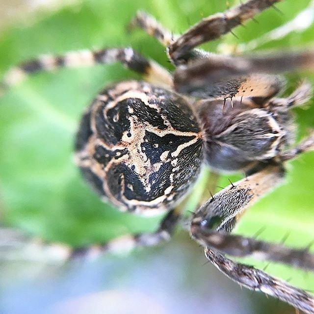 #spider #provence #macro #macrophotography #naturephotography @maisonlambot